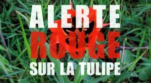affiche film alerte tulipe